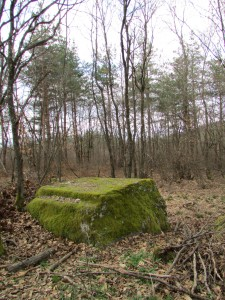 30.1-st day-Buzovgrad ecopath-Dyalaniyat kamak