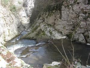 37.Dryanovo ecopath