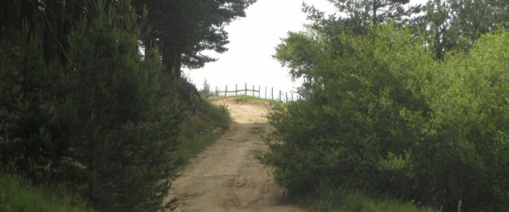 връх Богдан