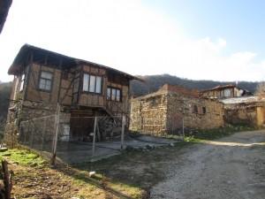25.Kashina