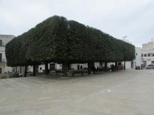 50.Alberobello