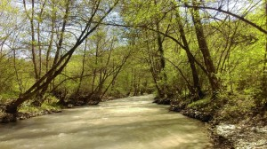 11.Eleshnitsa river
