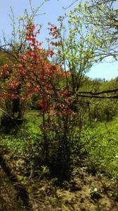 3a.blossom tree