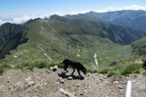 21.Fagarsh mountains-Moldoveanu peak