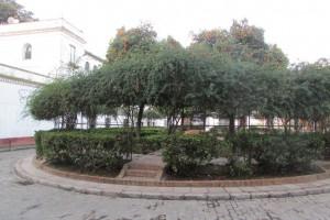 19.Sevilla-Bario Santa Cruz