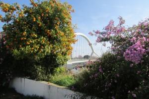 33.Seville II-Puente de la Barqueta