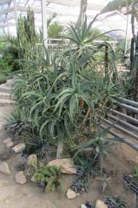 18.Botanic garden and palace Balchik