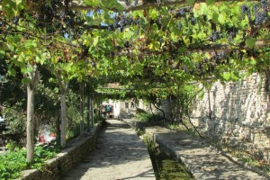 46.Botanic garden and palace Balchik-Wine alley