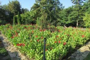 7.Botanic garden and palace Balchik