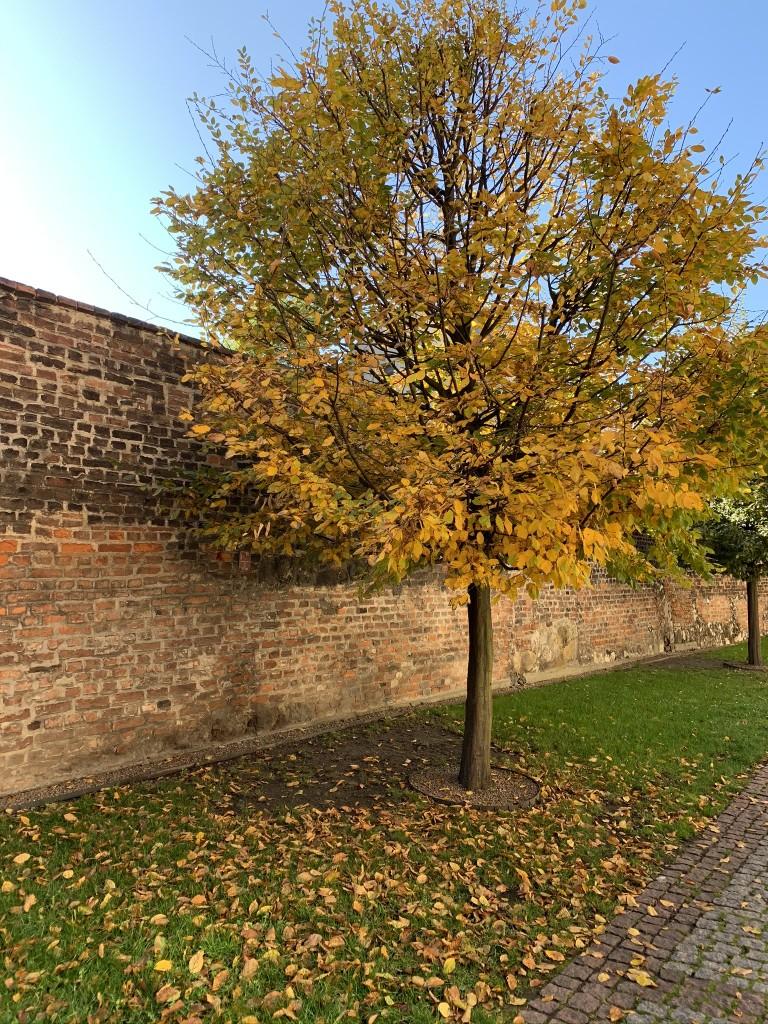 Краков златна есен
