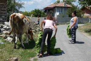 3.Vishegrad village