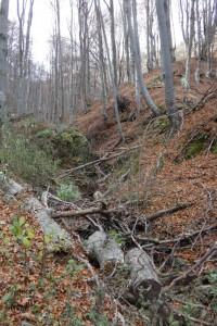 8.Vlahina mountain