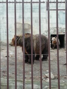 17.Bitola-zoo