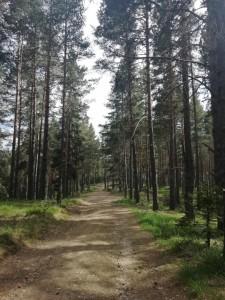 19.Dospat path